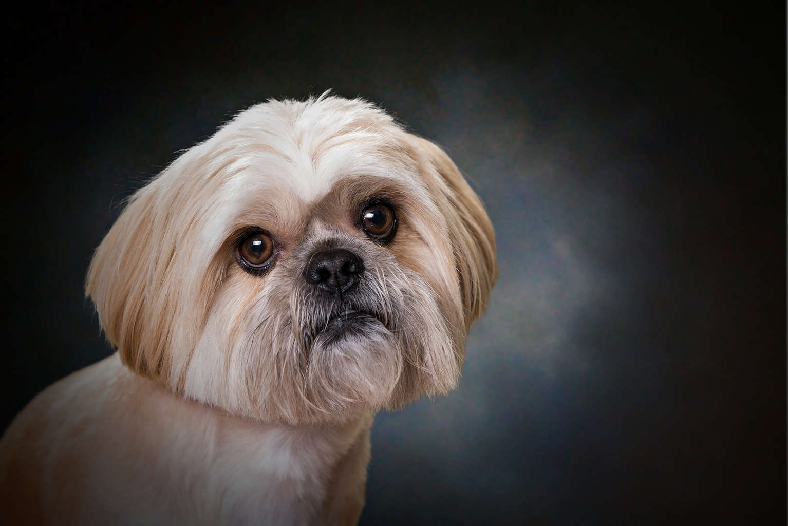 dog photography, pet portraits