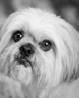 Pet Photography Competition 2018