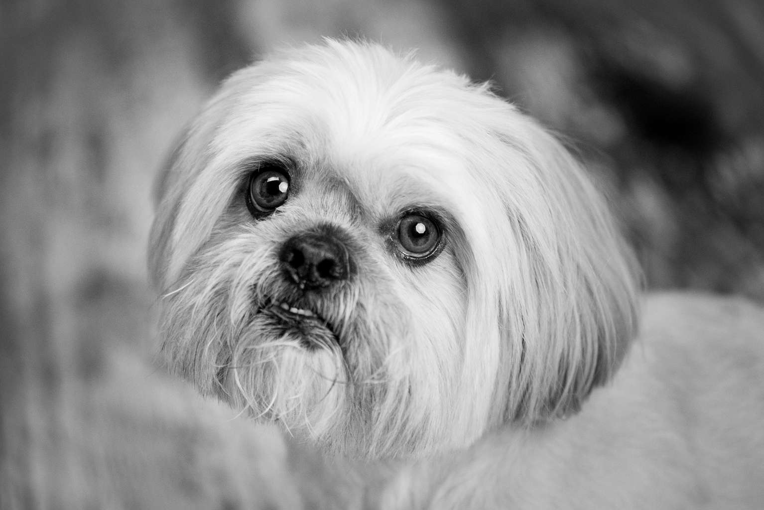 Cute Dog Portrait, bournemouth photo studio